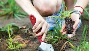 Gardening Basics 2