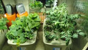 Hydroponic Gardening 2