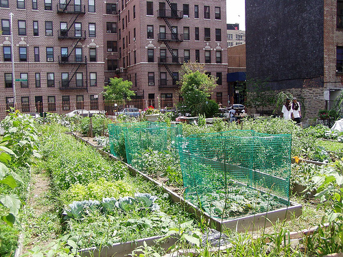 Urban Gardens 1